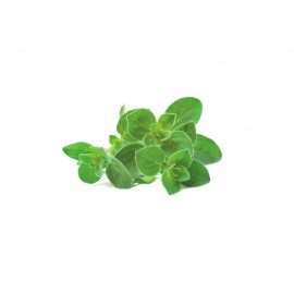 Click and Grow Smart Garden Refill 3 stk. Planter: Oregano