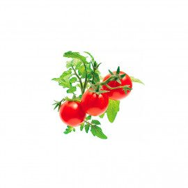 Click and Grow Smart Garden Refill 3 stk. Planter: Mini Tomato